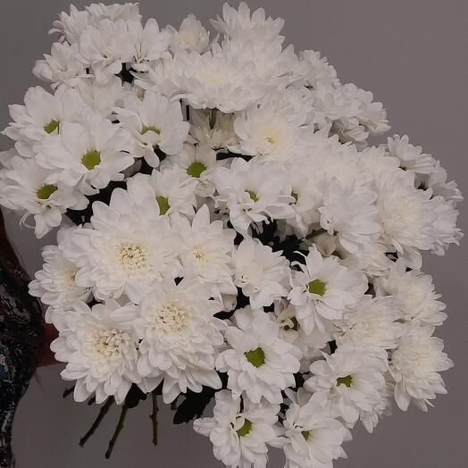 11 хризантем под ленту