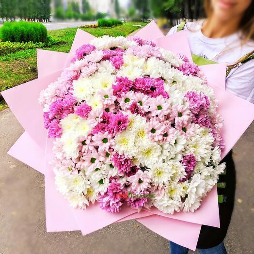Букет из 51 хризантемы