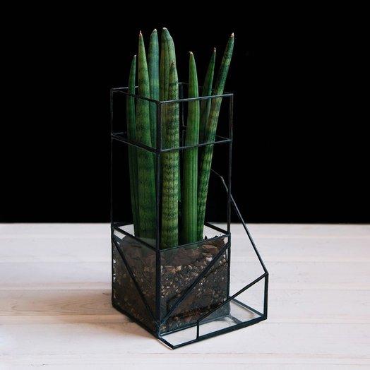 Стеклянное кашпо с растением BEIRA SANSA: букеты цветов на заказ Flowwow