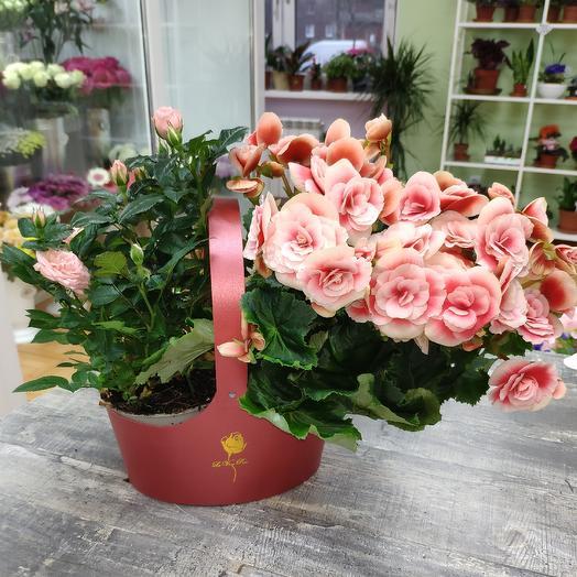 Бегония и роза: букеты цветов на заказ Flowwow