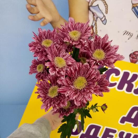Bush Chrysanthemum