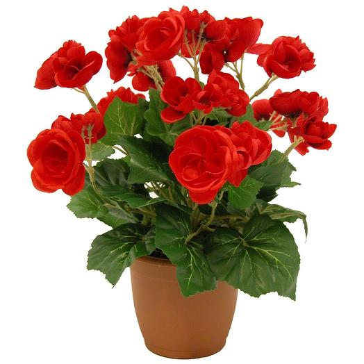 Бегония+грунт+кашпо: букеты цветов на заказ Flowwow