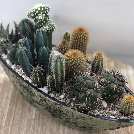 Садик из кактусов