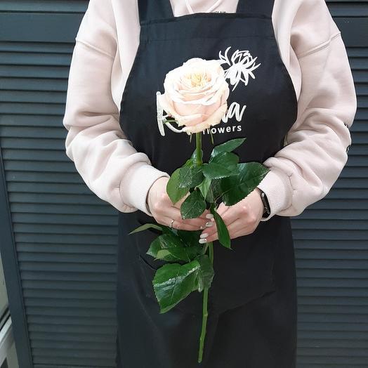 Роза Эквадор сорт Шиммер