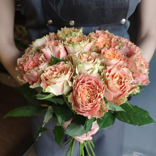Роза Луиза 15
