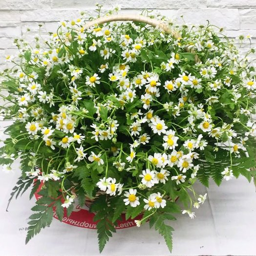 Привет, лето: букеты цветов на заказ Flowwow