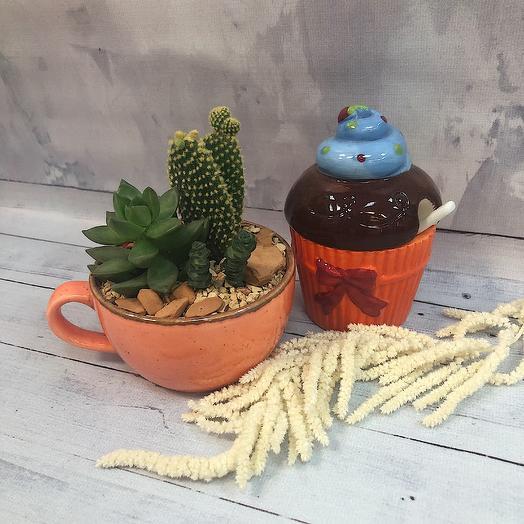Кашпо с кактусом и суккулентом: букеты цветов на заказ Flowwow