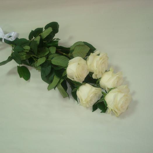 Розы 5шт