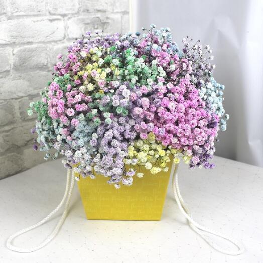 Fragrant rainbow gypsophila in a pot