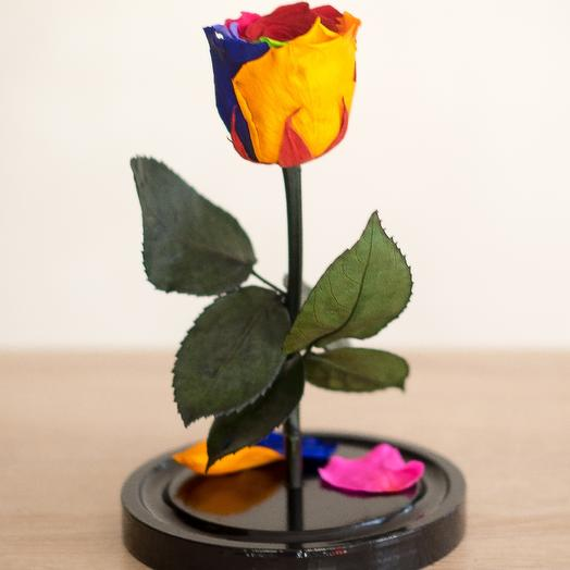 Радужная роза в колбе Мини Плюс: букеты цветов на заказ Flowwow