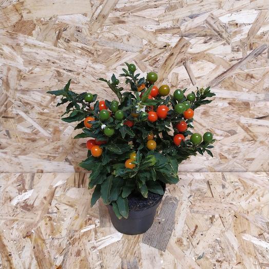Соланум: букеты цветов на заказ Flowwow