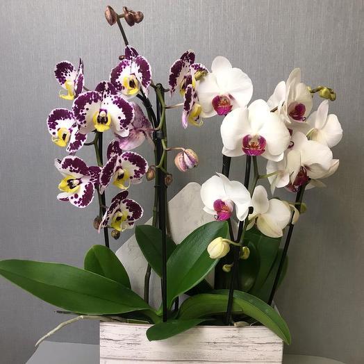 Элегантный сюрприз: букеты цветов на заказ Flowwow