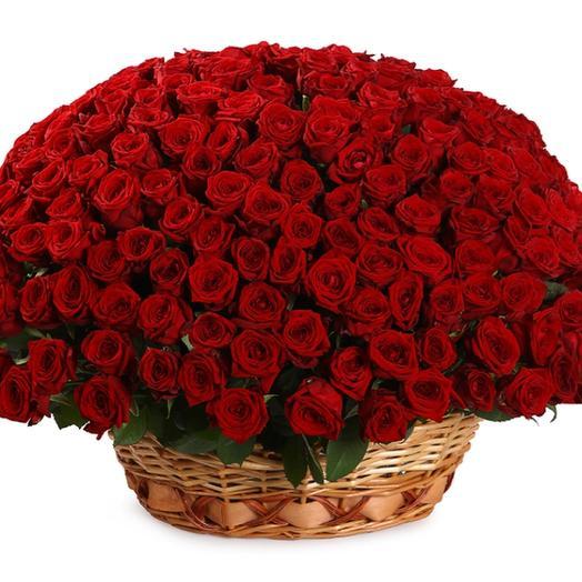 251 красота: букеты цветов на заказ Flowwow