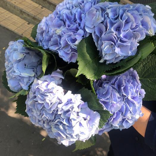 Букет гортензии: букеты цветов на заказ Flowwow