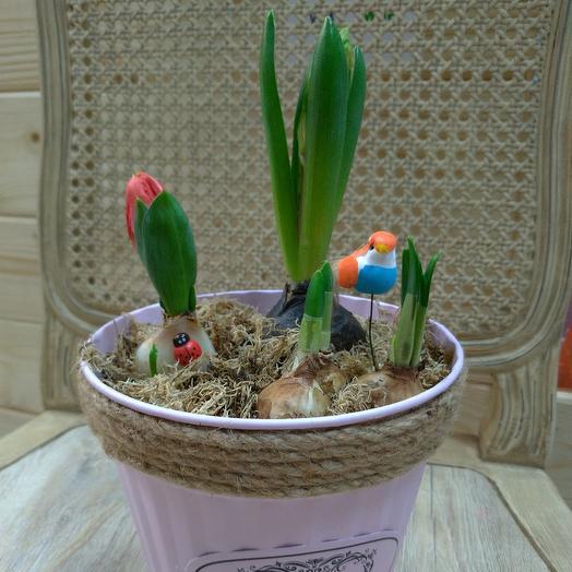 Гиацинт, тюльпаны, нарциссы