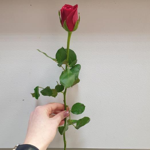 Роза алая Кенийская 40 см