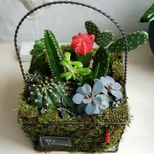 Корзинка с кактусами