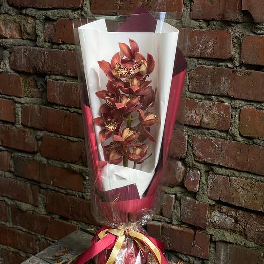 Орхидея в упаковке