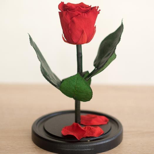 Роза в колбе Мини красная: букеты цветов на заказ Flowwow