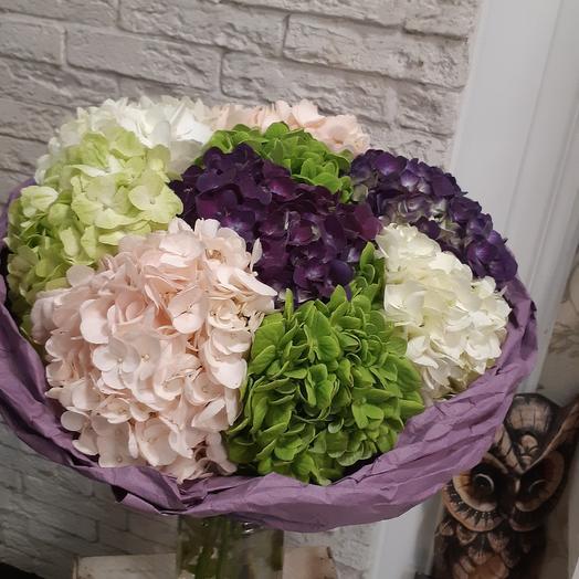 Огромные шапки гортензии: букеты цветов на заказ Flowwow
