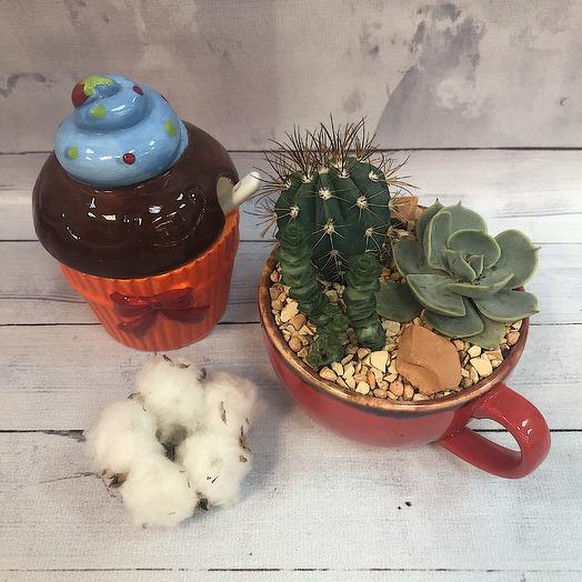 Кружечка с кактусом и суккулентом: букеты цветов на заказ Flowwow