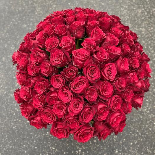 Роза Эквадор Експлоер 70 см
