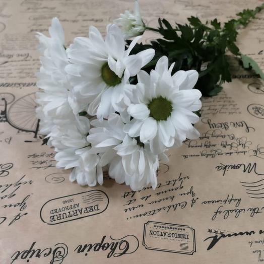 Хризантема чик белая