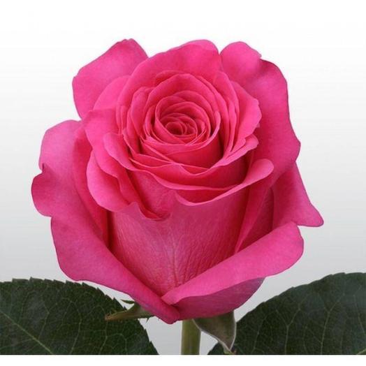 Роза «пинк флойд» Эквадор 60 см
