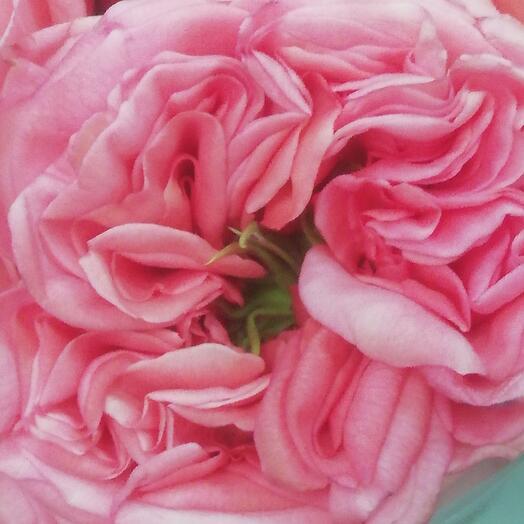 Роза Лондон 70 см