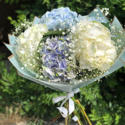Bouquet of hydrangeas with gypsophila
