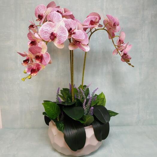 Композиция орхидеи с лавандой в кашпо