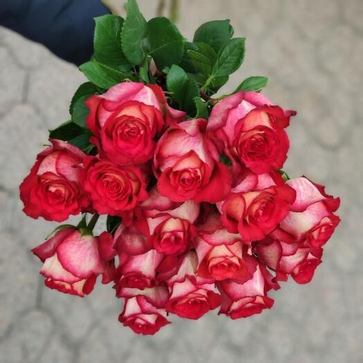 15 роз Игуана