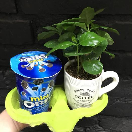 Кофе-Орео: букеты цветов на заказ Flowwow
