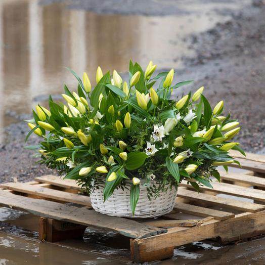 """Букет """"Волшебство"""": букеты цветов на заказ Flowwow"""
