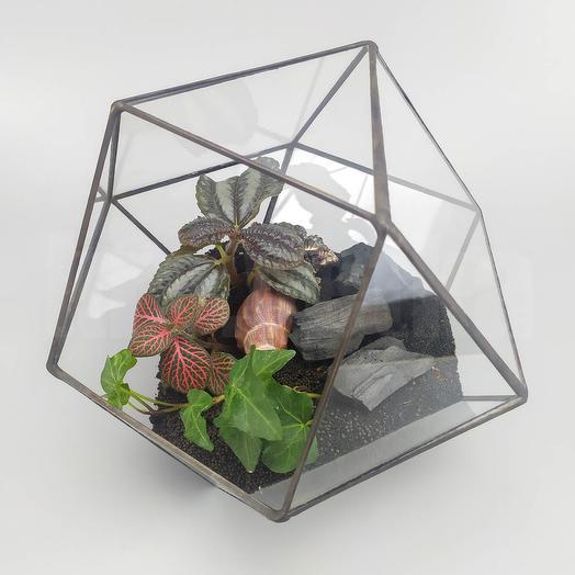 Флорариум с углем в кубооктаэдре