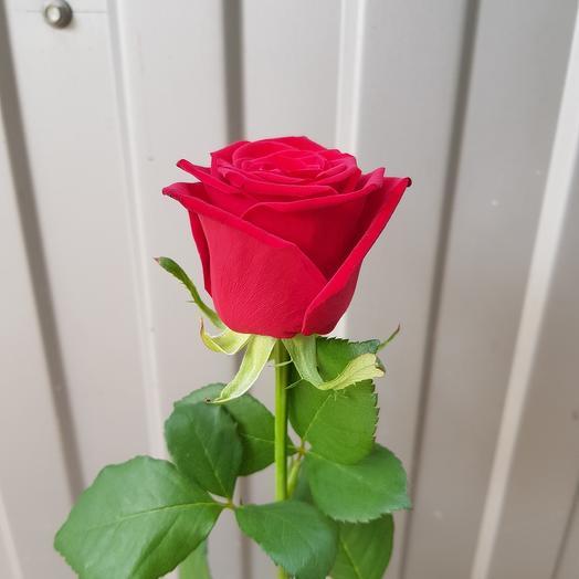 Роза-Ред науми