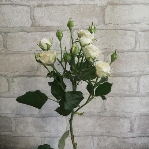 Кустовая белая роза 1 ветка 50см