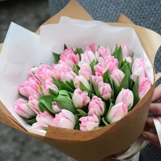 Тюльпаны сортовые Голландия