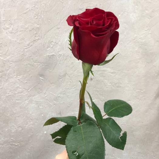 Розы красные сорта Rhodos
