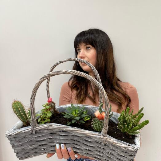 Изящная Корзина 🧺 кактусов