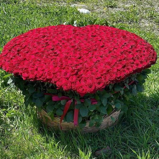 501 Красная Роза 🌹 ️