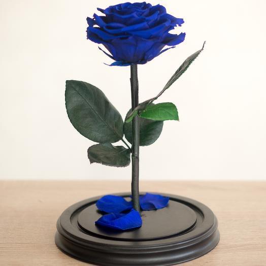 Роза в колбе Премиум синяя: букеты цветов на заказ Flowwow