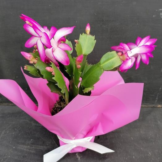 Микс Шлюмбергера: букеты цветов на заказ Flowwow