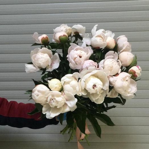 Фестима пион: букеты цветов на заказ Flowwow