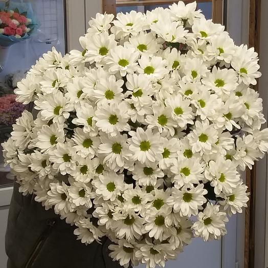 11 кустовых хризантем