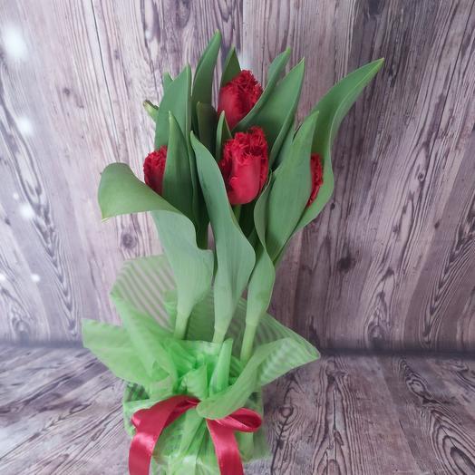 Тюльпаны мохровые в горшке