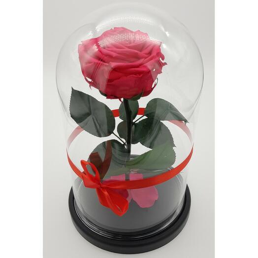 Роза в колбе премиум Фуксия 27*15*6см