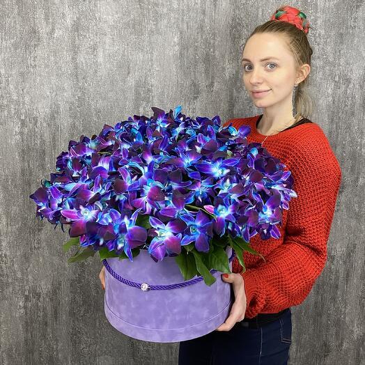 Мегастар 201 орхидея
