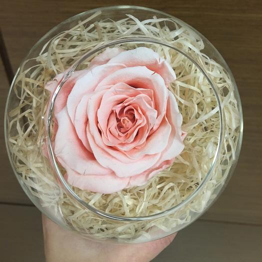 Стабилизированная роза в стеклянной сфере: букеты цветов на заказ Flowwow