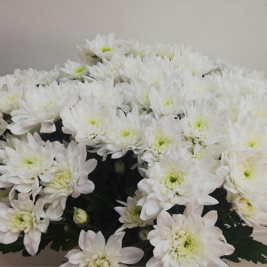 White dew: flowers to order Flowwow